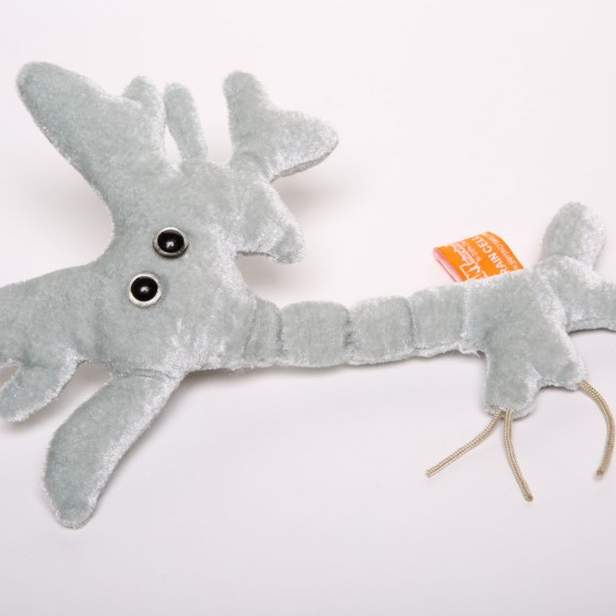 picture of brain cell soft toy
