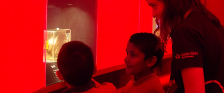Primary school pupils looking at the brain specimen in the Pod