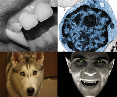 Vicious Vampires, Microscopic Monsters and Deadly Diseases