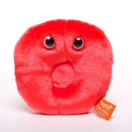picture of red blood cell toy