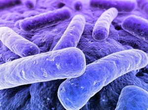 Picture of bacteria